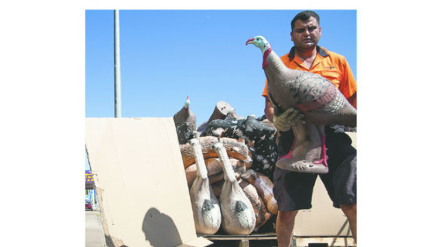 A courier delivers target animals to Benson Archery, Parramatta Road, Granville Photo : Lyndal Irons