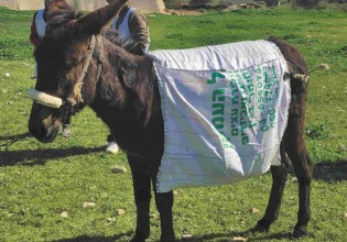 Better treatment for donkeys. Photo: Walaa Abubaker