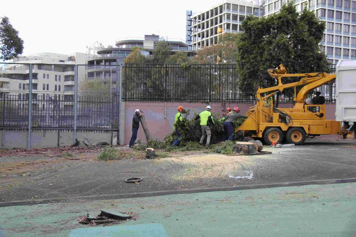 Clearing site for student housing Photo: Lyn Turnbull