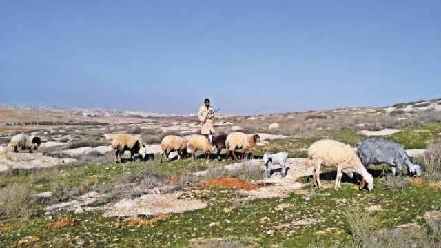 Jibrin and his sheep, with a settlement behind Photo: Aletia Dundas