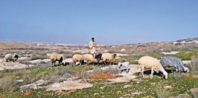 Jibrin and his sheep, with a settlement behind Photo: Aletia Dundas