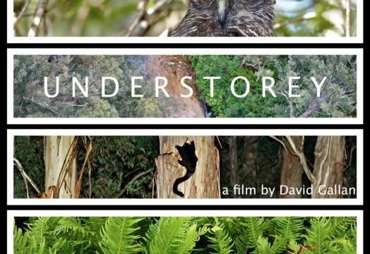 12.1.Understorey