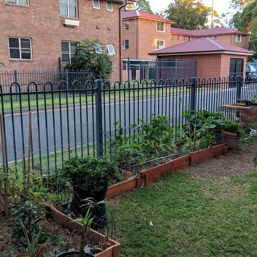 The garden in John Street has built community. Photo: Fiona Poeder