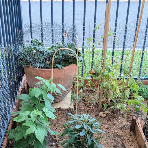 Thriving vegetable plot. Photo: Fiona Poeder